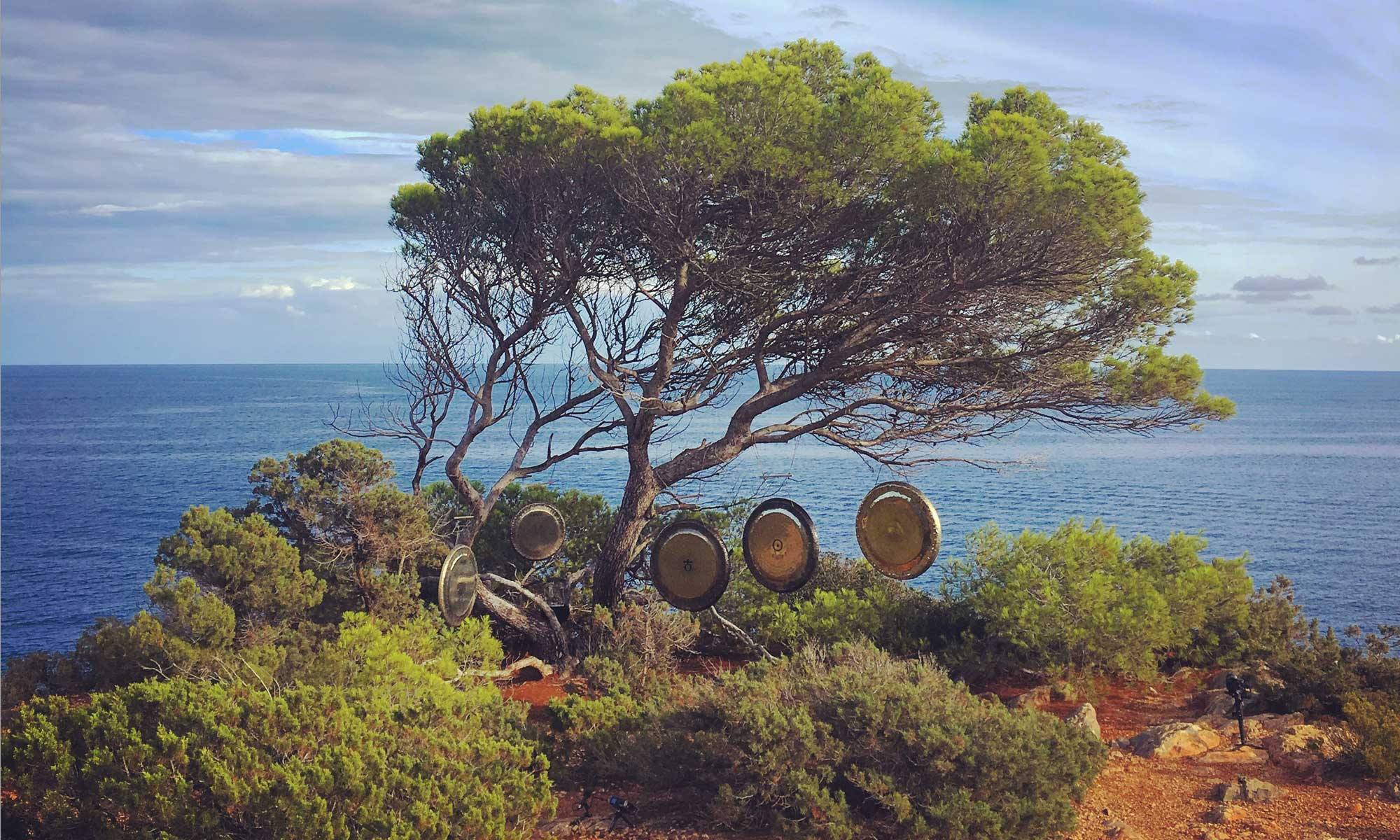Gongs & Tree in Iibza
